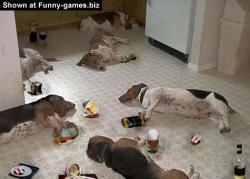 animal-drinking-party_mod.jpg