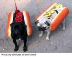 weinerdogs.jpg